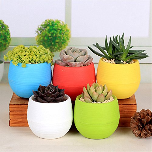 Nerlmiay plant flower pots - Indoor colorful plants ...