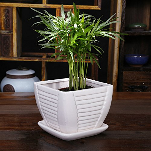 white ceramic flower pot plant pot square with attached saucer with drainage holes. Black Bedroom Furniture Sets. Home Design Ideas