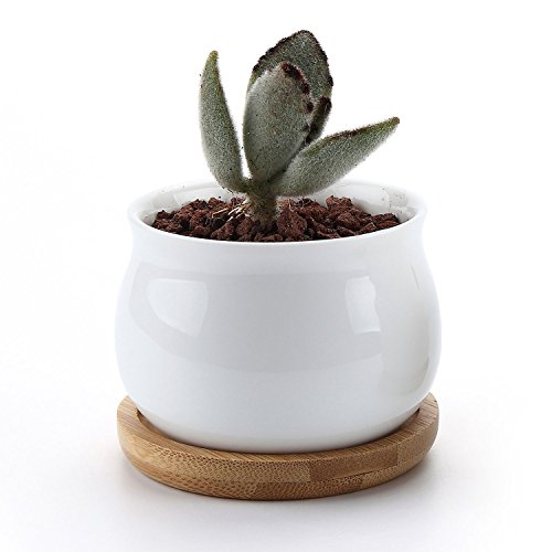 T4u 2 75 Inch Ceramic White Jar Shape Design Succulent